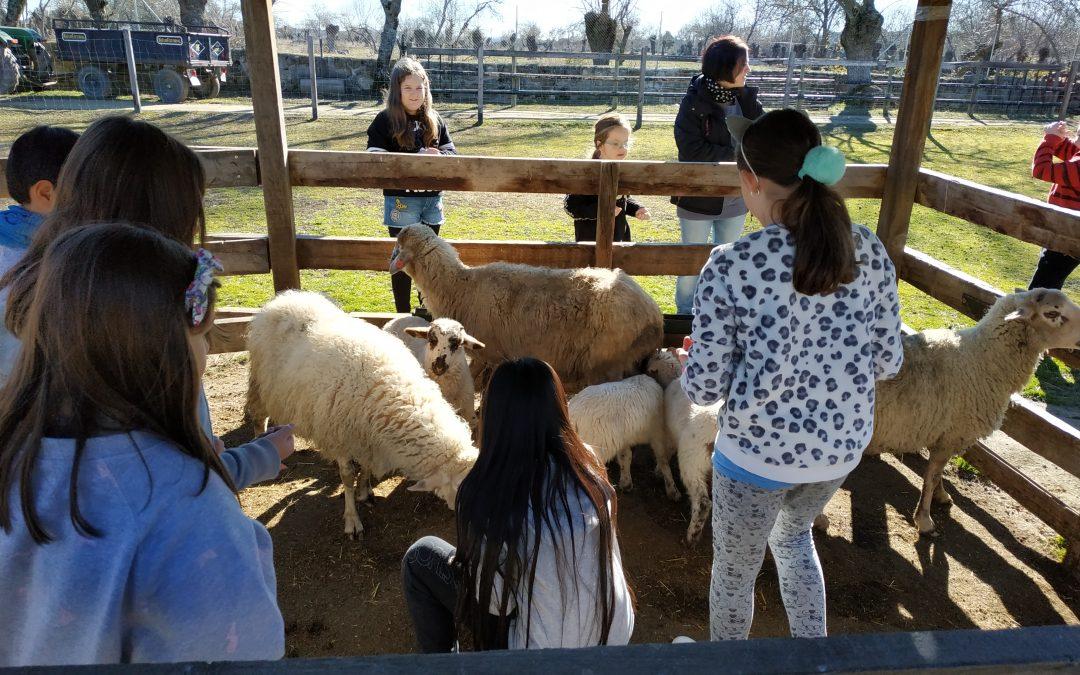 Primaria: Inmersión Lingüística 4º – ¡Visitamos a los animales! (Martes 5 de febrero)