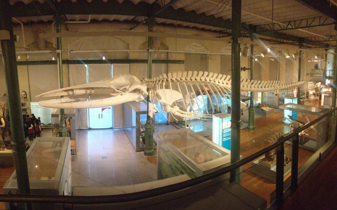Primaria: Visita al Museo de Ciencias Naturales 2019.