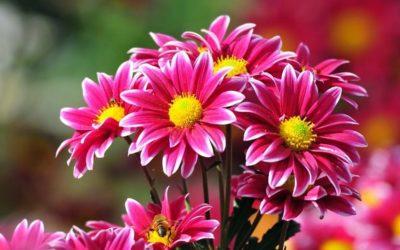 Mes de Mayo. Mes de las flores. Mes de María